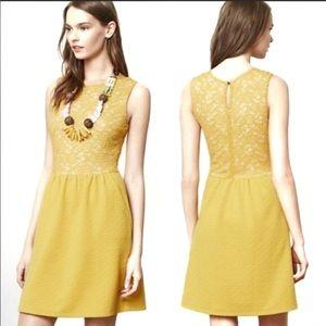 Anthropologie Maeve Marigold Vera Lace Mini Dress